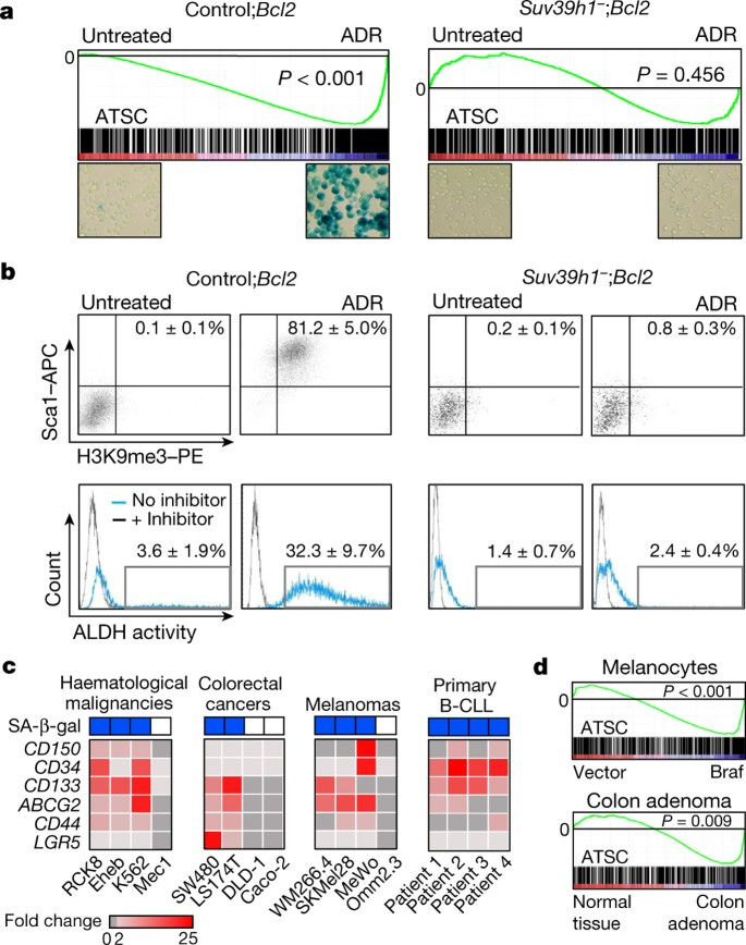 Senescence Associated Reprogramming Promotes Cancer Stemness Nature