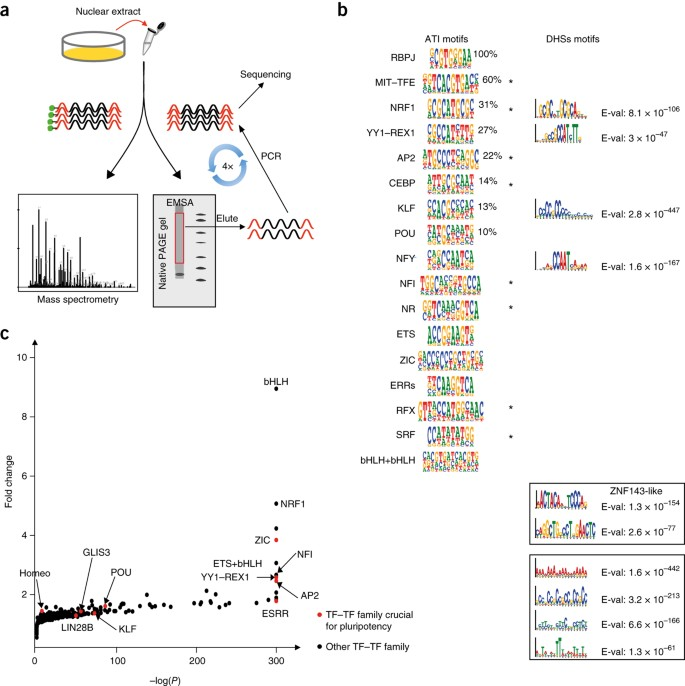 A Protein Activity Assay To Measure Global Transcription Factor Activity Reveals Determinants Of Chromatin Accessibility Nature Biotechnology