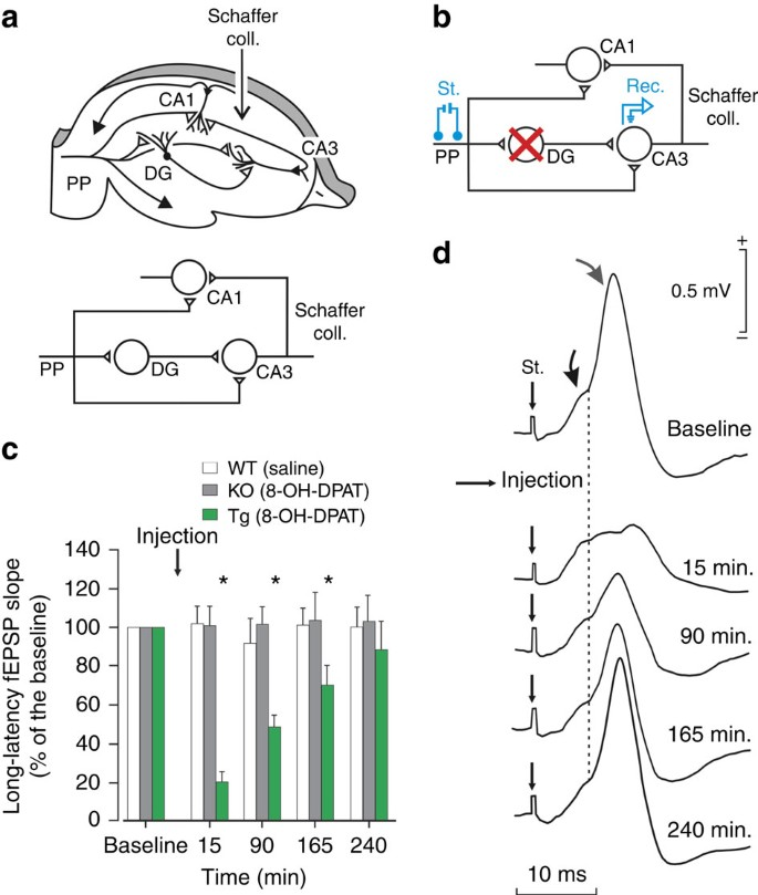 Rapid erasure of hippocampal memory following inhibition of ... on