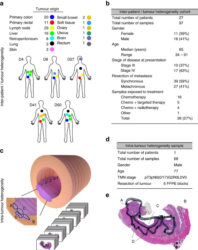 colon cancer genetic heterogeneity