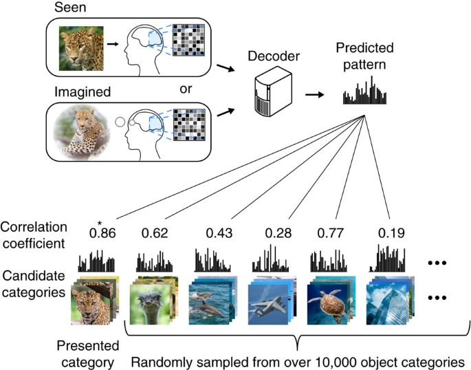 Generic decoding of seen and imagined objects using hierarchical visual  features | Nature Communications