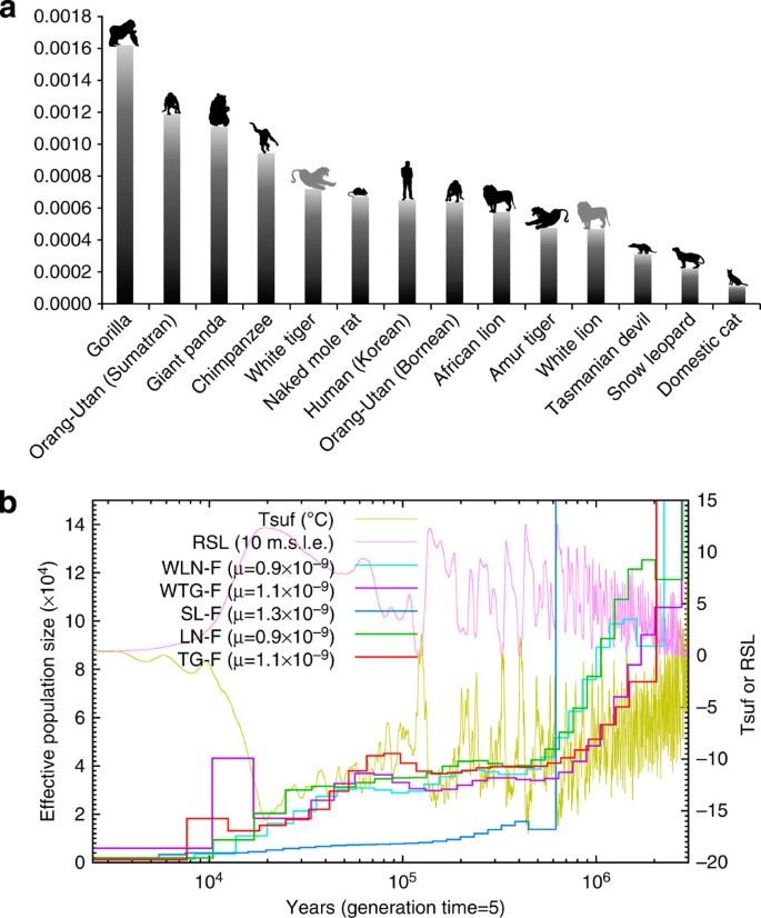 The Tiger Genome And Comparative Analysis With Lion And Snow Leopard  Genomes   Nature Communications