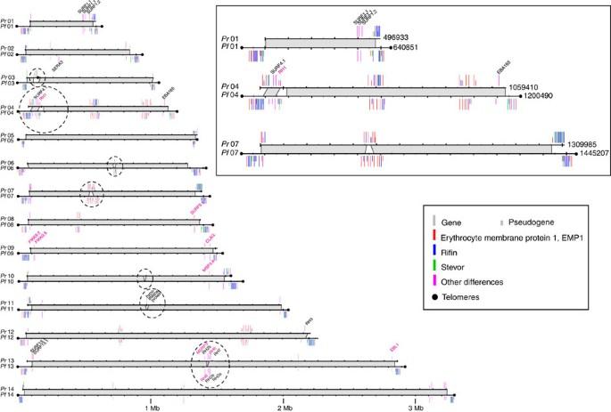 Plasmodium malária genom)