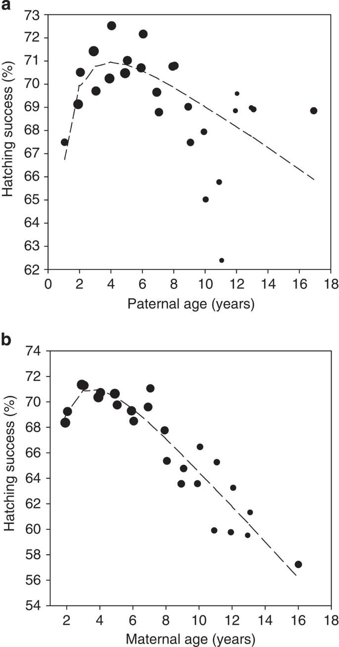 Attractiveness male age peak of When Are