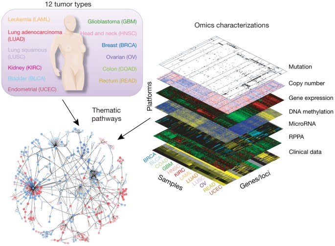 The Cancer Genome Atlas Pan Cancer Analysis Project Nature Genetics