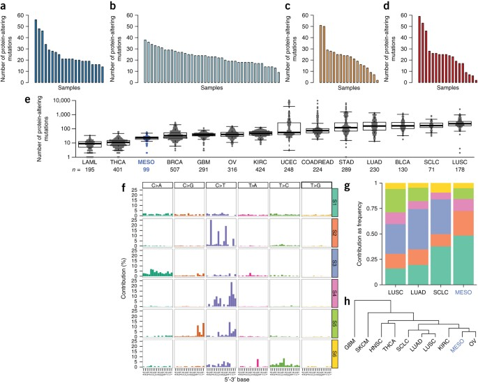 Comprehensive Genomic Analysis Of Malignant Pleural Mesothelioma Identifies Recurrent Mutations Gene Fusions And Splicing Alterations Nature Genetics