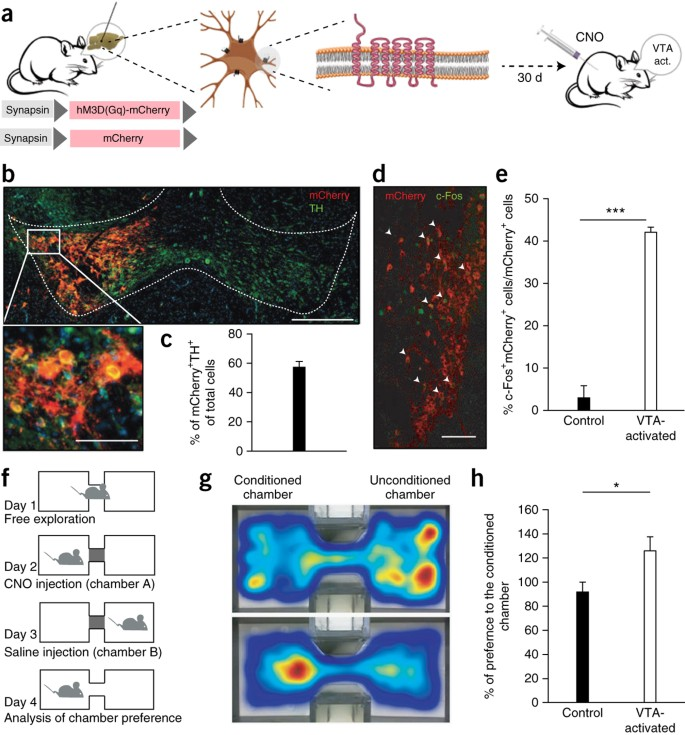 Activation of the reward system boosts innate and adaptive immunity |  Nature Medicine