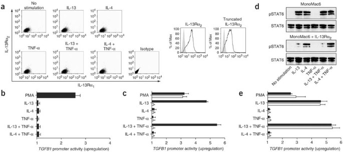 IL-13 signaling through the IL-13α 2 receptor is involved in