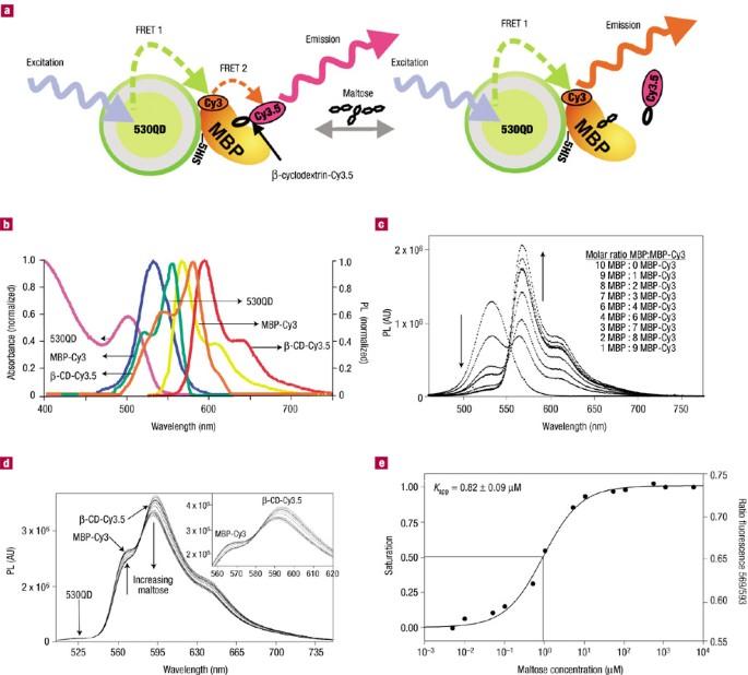 Self-assembled nanoscale biosensors based on quantum dot
