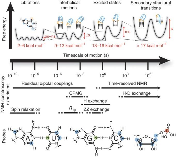Characterizing Rna Dynamics At Atomic Resolution Using Solution