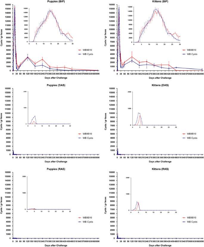 Giardia remedio caseiro - A Giardia a psoriasis oka - Giardia vaccine cost