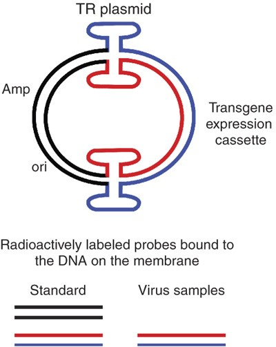 Production and characterization of adeno-associated viral