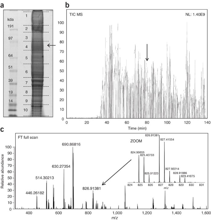 In-gel digestion for mass spectrometric characterization of proteins