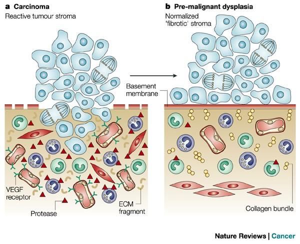 Endometrium rák bevacizumab,