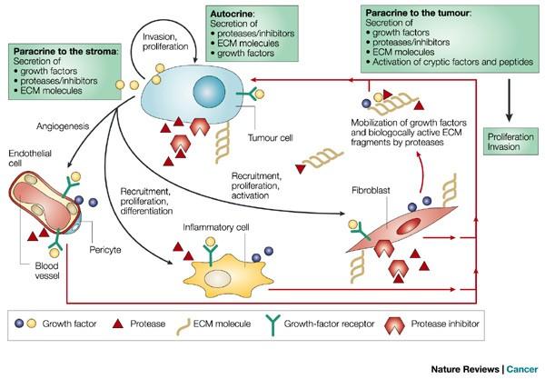 Az endometrium rákos terápiás célpontjai - a természet a klinikai onkológiát vizsgálja - Hírek