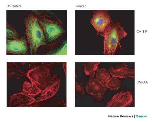 Disrupting Tumour Blood Vessels Nature Reviews Cancer
