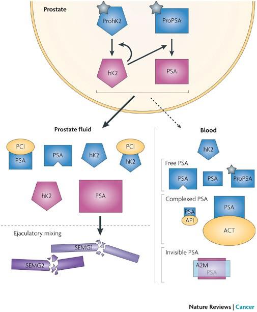 prostate specific antigen review
