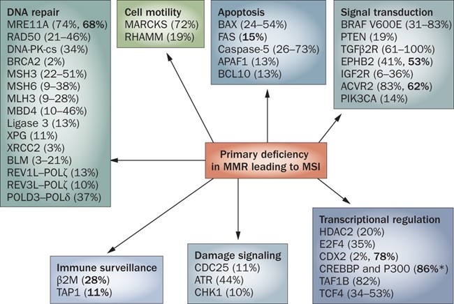 Mismatch Repair Deficient Colorectal Cancer In The Era Of Personalized Treatment Nature Reviews Clinical Oncology
