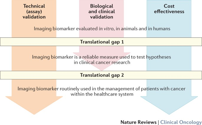 Imaging Biomarker Roadmap For Cancer Studies Nature Reviews Clinical Oncology