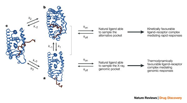 Steroid-hormone rapid actions, membrane receptors and a