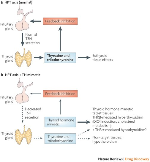 Thyroid Hormone Mimetics Potential Applications In