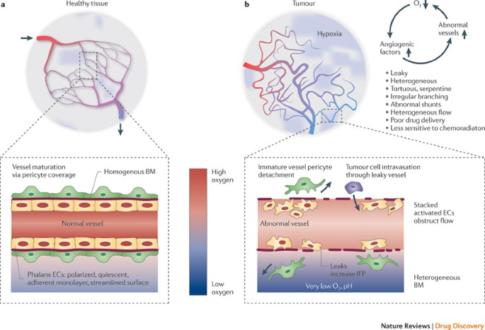 Principles And Mechanisms Of Vessel Normalization For Cancer And Other Angiogenic Diseases Nature Reviews Drug Discovery