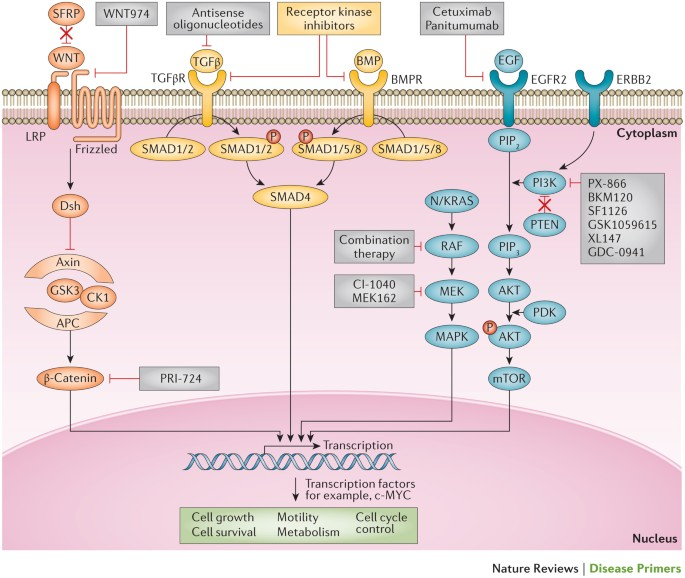 Colorectal Cancer Nature Reviews Disease Primers