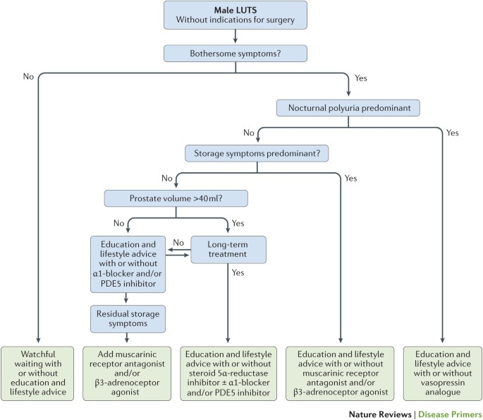 benign prostatic hypertrophy pathophysiology)