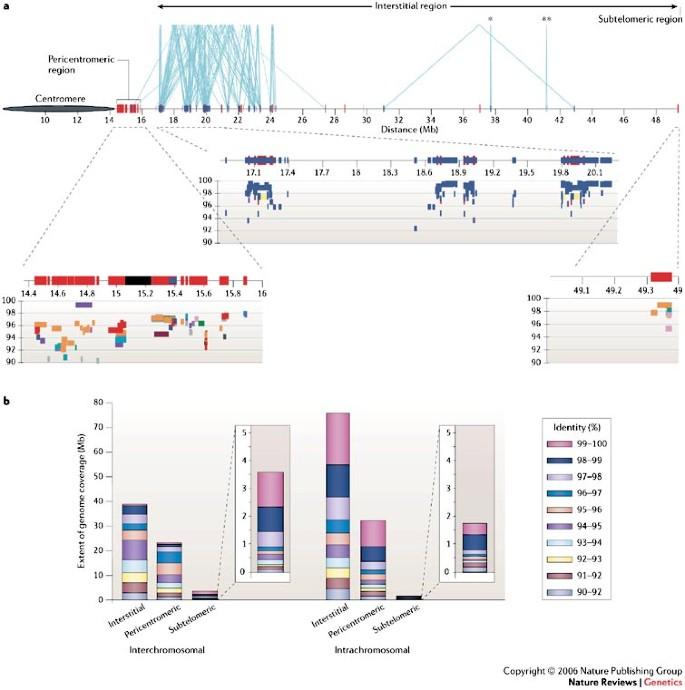 Primate segmental duplications: crucibles of evolution