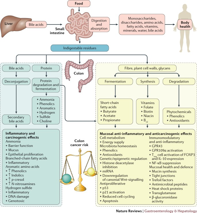 Diet Microorganisms And Their Metabolites And Colon Cancer Nature Reviews Gastroenterology Hepatology