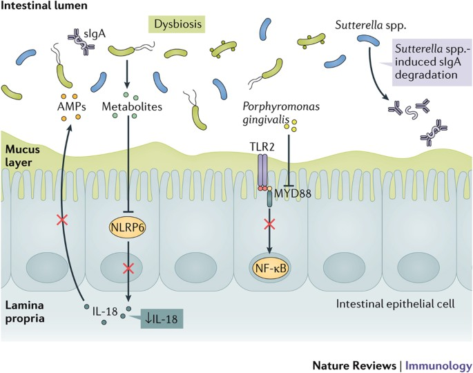 dysbiosis nature