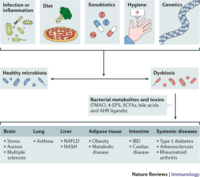 dysbiosis review