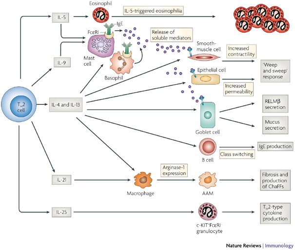 helminth infection nature review