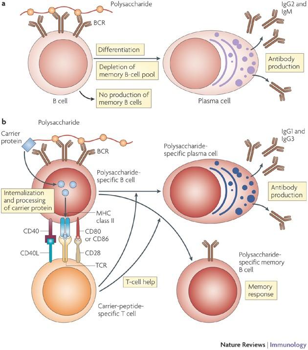 cryopharma negi genitali