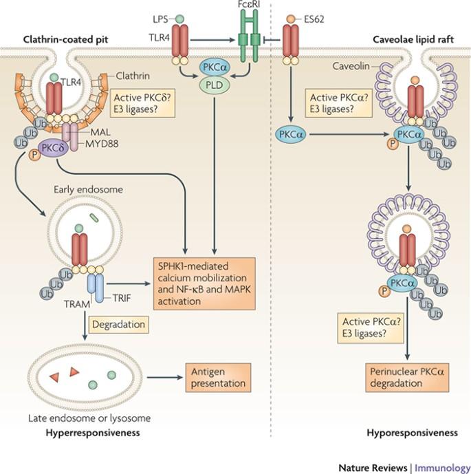 humán papillomavírus vakcina szingapúr