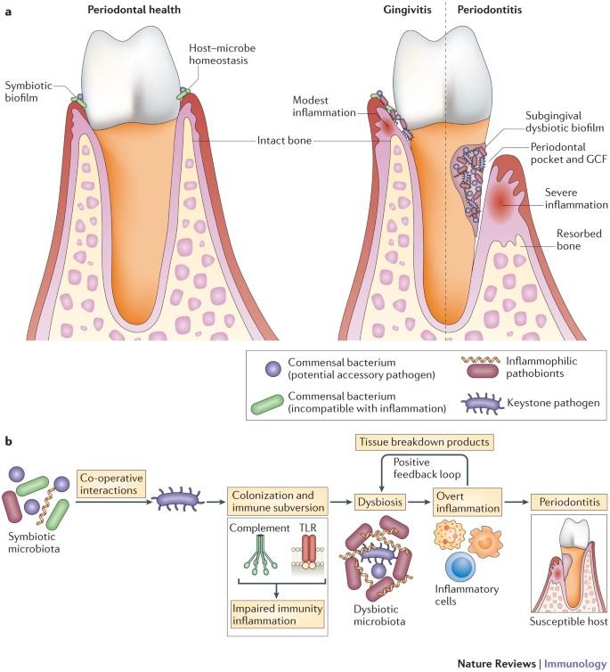 antihelmintic death helminth infection diagnosis