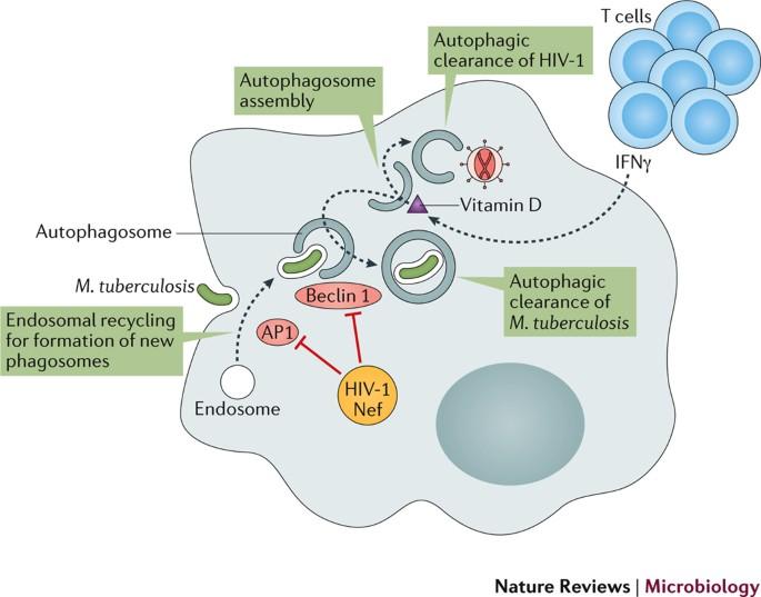 A helminthiasis patogenezise A helminthiasis fő tünetei, Az orsóférgesség okai, tünetei és kezelése