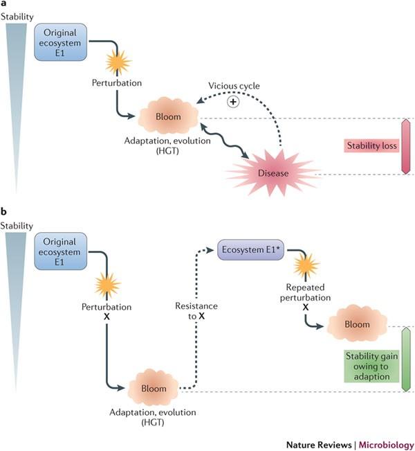 Dysbiosis nature. Microbiota intestinală schimbă paradigmele în sindromul intestinului iritabil