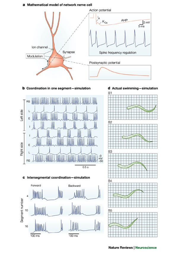The motor infrastructure: from ion channels to neuronal