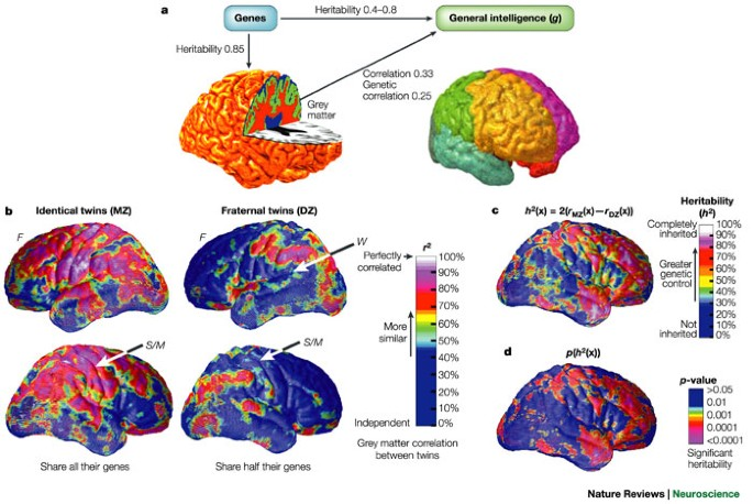 Neurobiology of intelligence: science and ethics | Nature