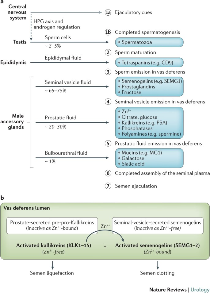prostatitis and male infertility