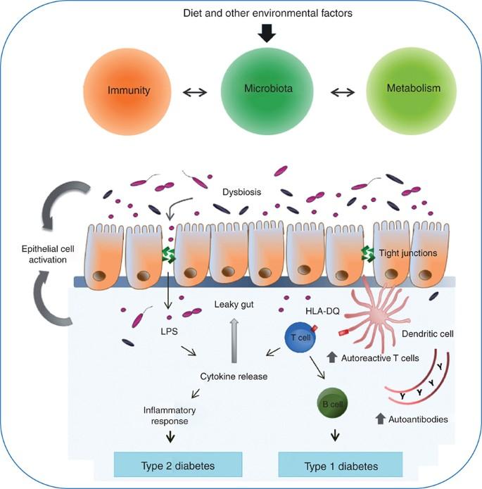 dysbiosis of gut microbiota)