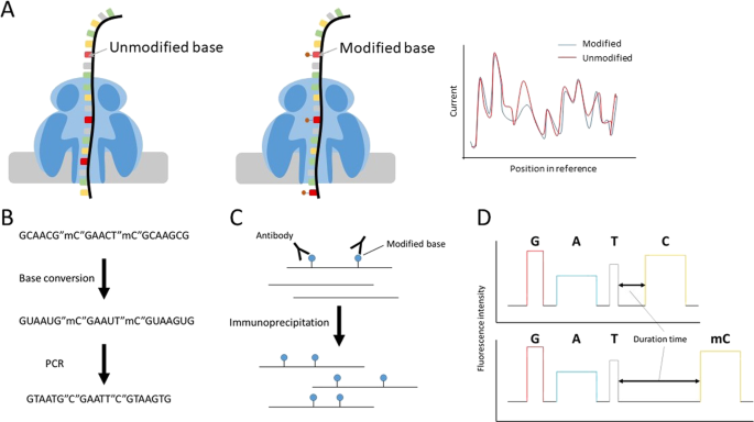 Recent advances in the detection of base modifications using the Nanop