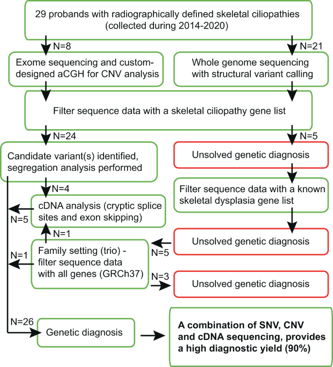 High Diagnostic Yield In Skeletal Ciliopathies Using Massively Parallel Genome Sequencing Structural Variant Screening And Rna Analyses Journal Of Human Genetics