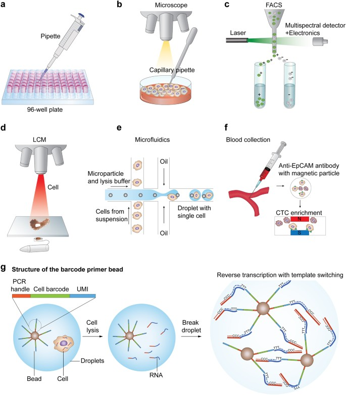 Single-cell RNA sequencing technologies and bioinformatics