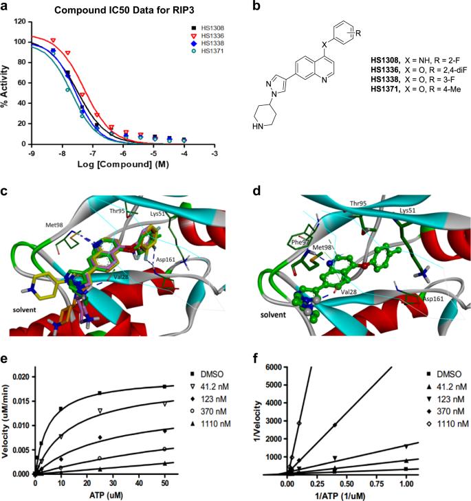HS-1371, a novel kinase inhibitor of RIP3-mediated