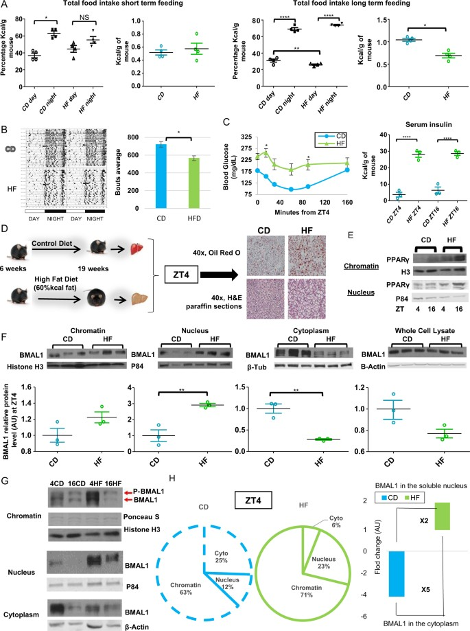 Rosiglitazone Reverses High Fat Diet Induced Changes In Bmal1