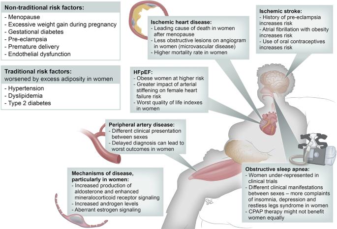 Obesity And Cardiovascular Disease In Women International Journal Of Obesity