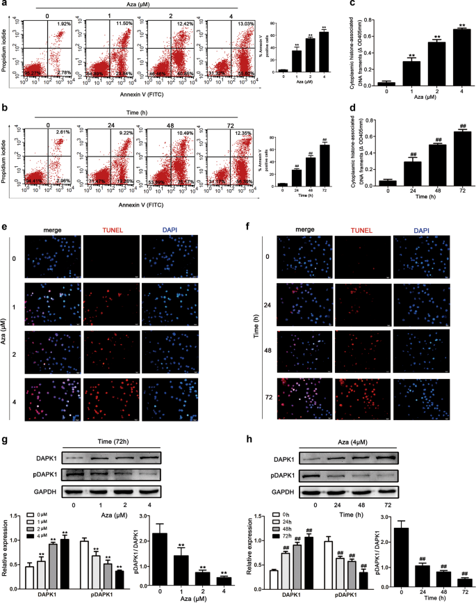 Activation of death-associated protein kinase 1 promotes