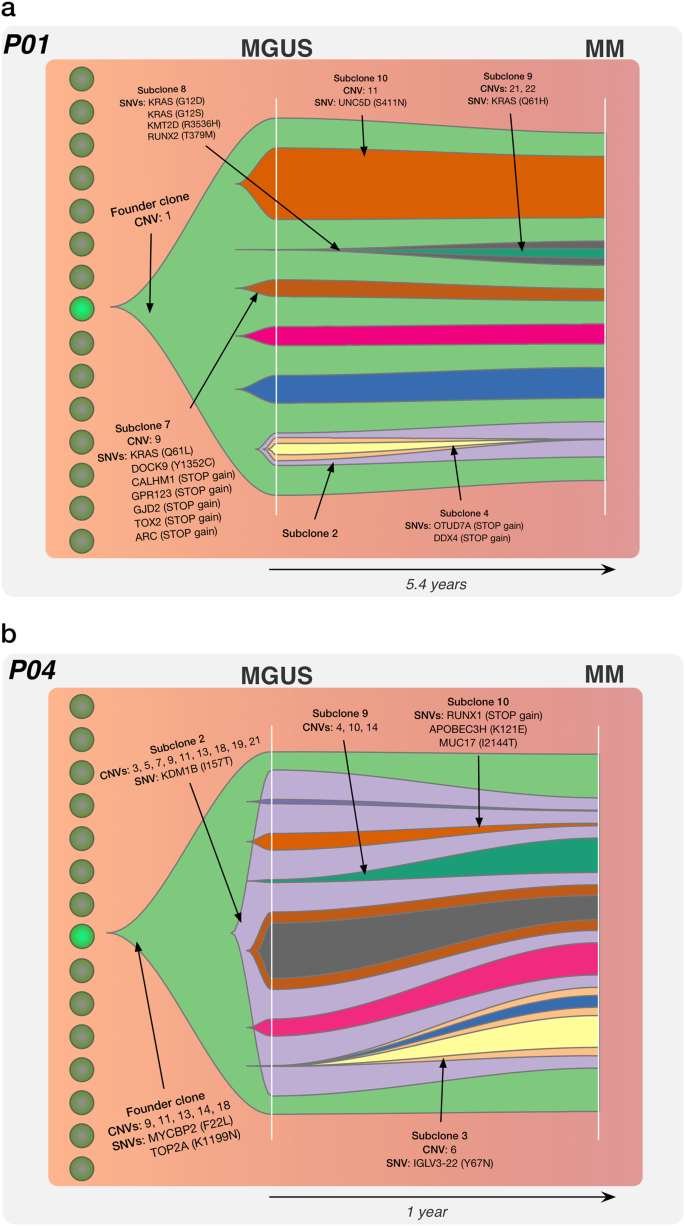 Subclonal evolution in disease progression from MGUS/SMM to